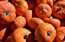 fall bounty