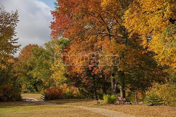 fall walking path