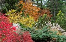 Colorful Garden Shrubs