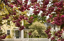 Home in the spring