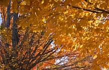 Autumn stonewall