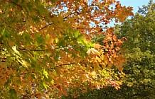 Fall Foliage And River