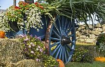 summer wagon wheel